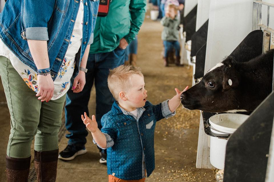 Dairy Discovery Barn Tour