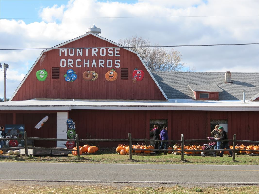 Montrose Orchards