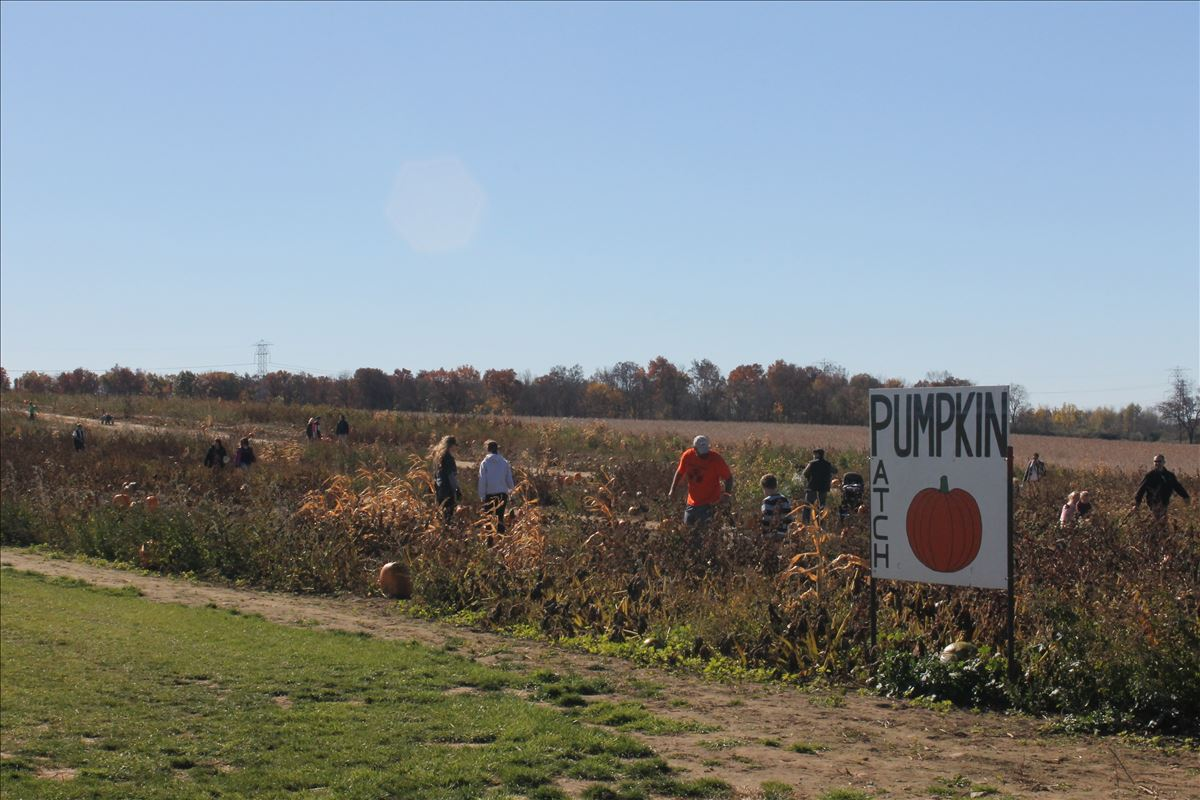 The Blast Corn Maze u-pick pumpkin patch