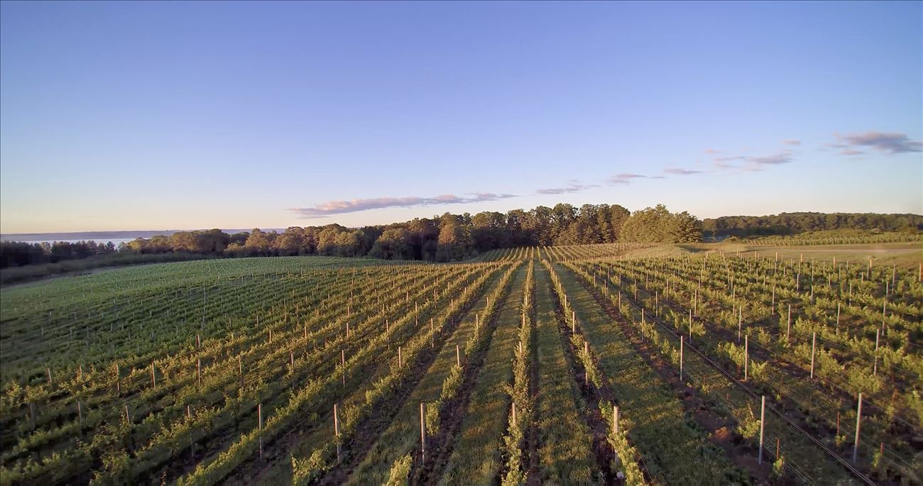 Hawthorne Vineyards drone shot