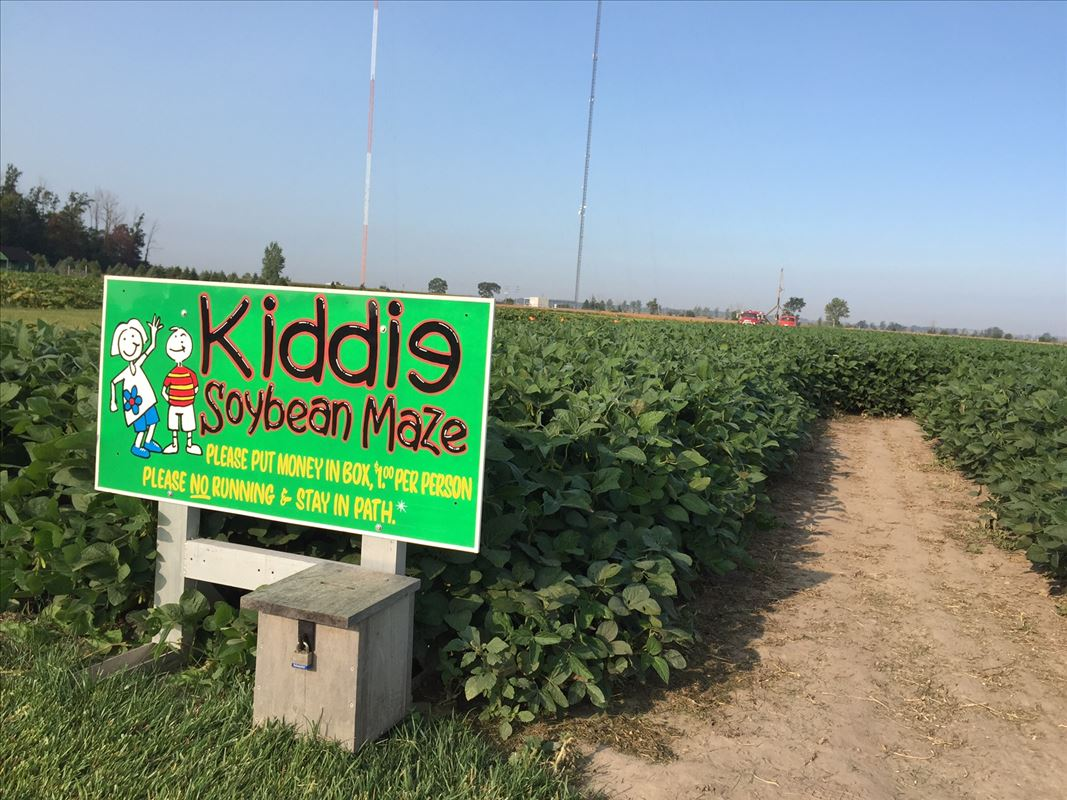 Johnson's Giant Pumpkins Soybean Maze