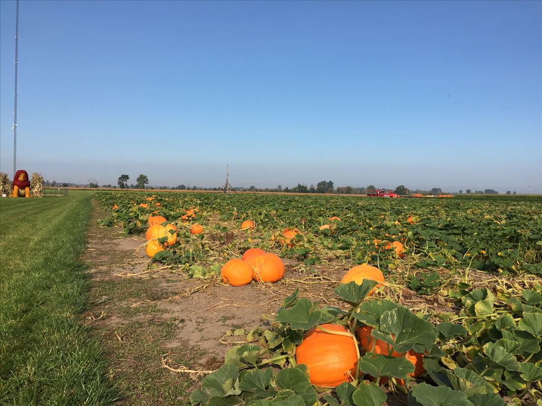 Johnson's Giant Pumpkin Patch