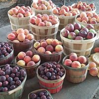 Prilliwitz Fruit Farms Bushels of Fruit