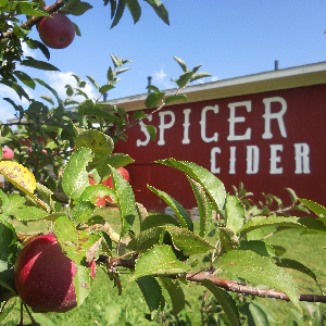 spicer_orchard_photo.png