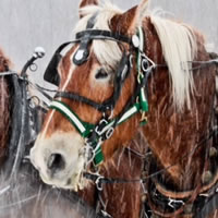 Enjoy a Horse-drawn Wagon Ride
