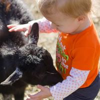 Visit Animals at a Petting Farm